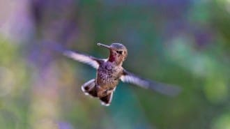 This shows a hummingbird. It's wings move so fast they are a blur. Similarly, a sanding pad vibrates so fast that the edges are a blur. So, care must be taken so that you do not bang into a piece and leave a mark.