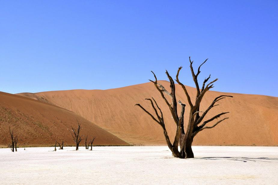 This shows a sandy desert with wooden trees. It is used for the sanding tips section.
