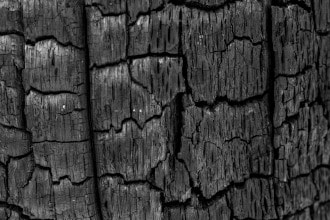 This image shows charred wood.